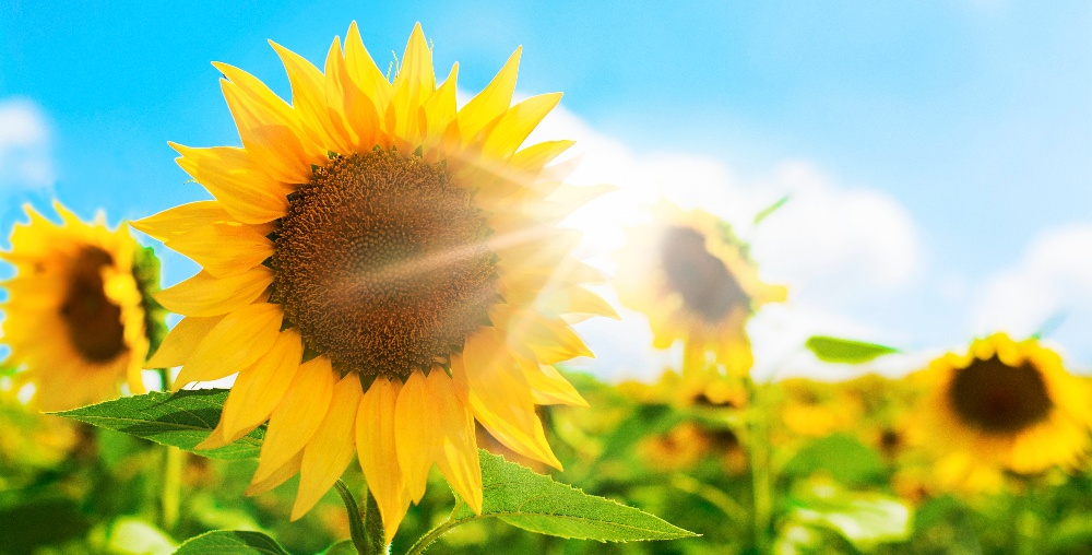 3 Ways to Increase Your Vitamin D Levels