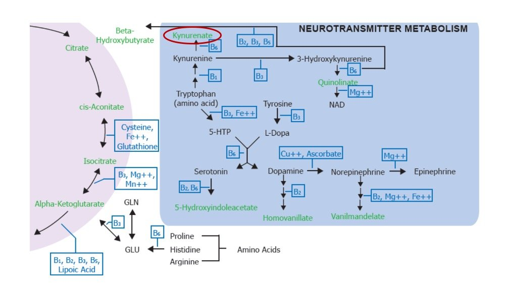 Neurotransmitter Chart