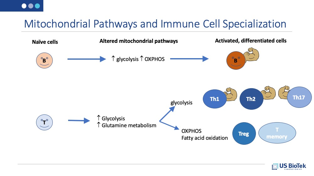 Mitochondrial Pathways and Immune Cell Specialization