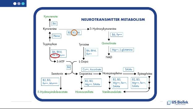 neurotransmitter metabolism